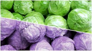 Purple & green cabbages